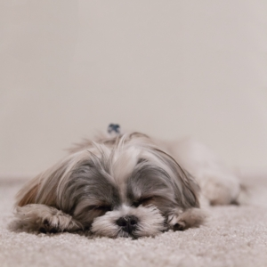 Hond aan het slapen - Airconditioning & warmtepomp Service Nederland
